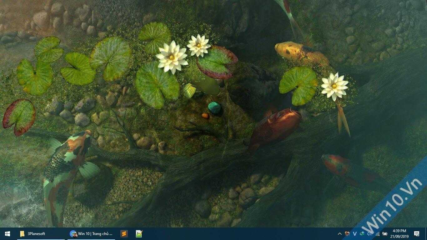 Wallpaper hồ cá 3D